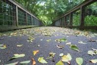 Leaves on a Bridge